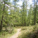 La Forêt de la Fracha 012-150x150